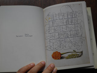 Mira calligraphiae monumenta / Joris Hoefnagel