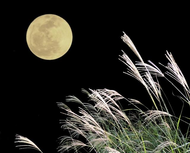 月とすすき