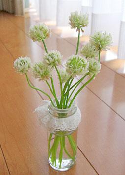 白詰草 シロツメクサ