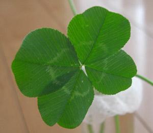7つ目の四つ葉のクローバー