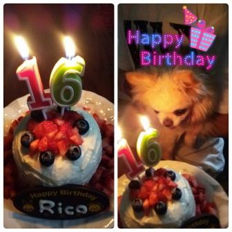 チワワのリコ 16歳のお誕生日