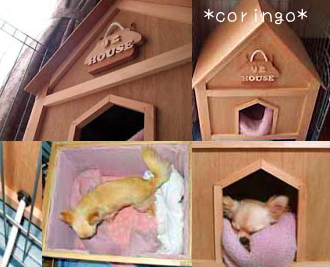 チワワ リコのハウス