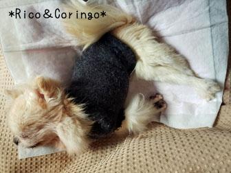 レッグウォーマーで犬の洋服作り 犬服
