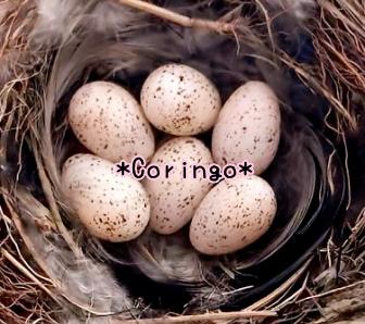 ツバメの卵 6個