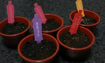 ミニ植木鉢