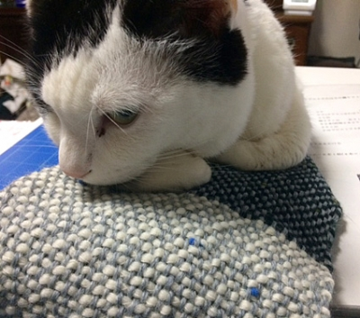 cat.mafu.jpg