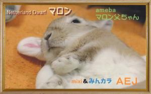 うさ友カードコンテスト最優秀カード