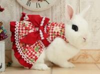 17.choco rabbit