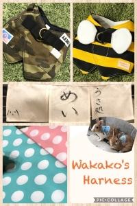 2019.36.wakakos harness