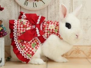 2019.39.choco rabbit