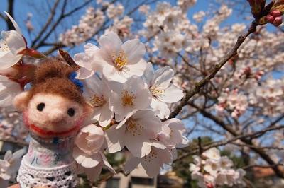 桜 096 - コピー.JPG