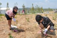 植樹祭2012