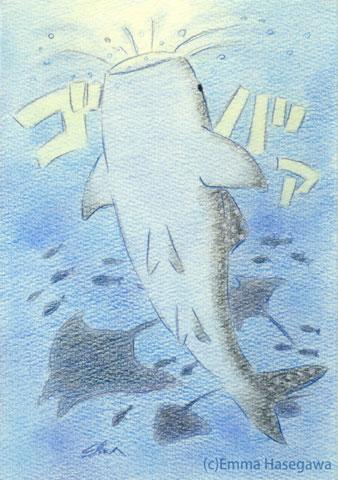 ジンベエザメのお食事☆