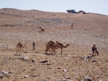 砂漠での駱駝と子供