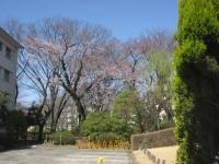 桜管理組合