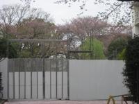 桜終わり組合