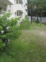 草と野バラ