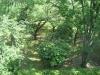 大公園の樹木