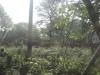 大公園樹木伐採
