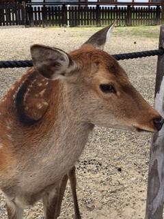 定番の鹿さん