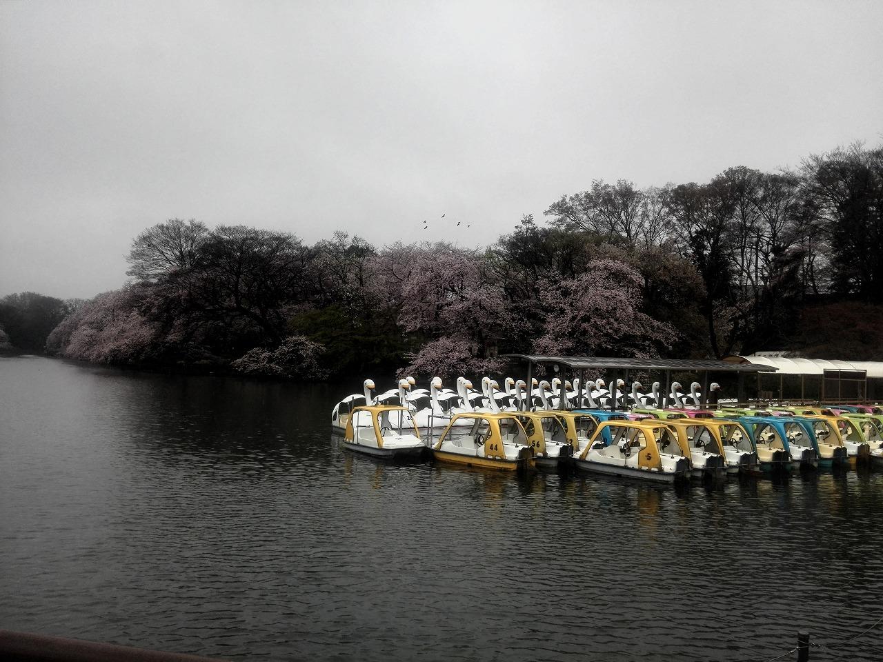 s-20160404井之頭公園 (2).jpg
