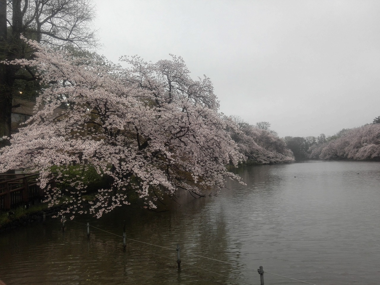 s-20160404井之頭公園 (3).jpg