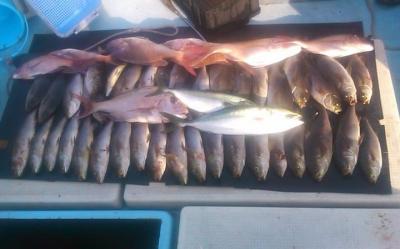 桜鯛が釣れました。