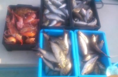 福岡の仕立船で釣ったイサキ、カサゴ釣り