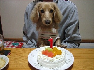 ケーキ ガン見。