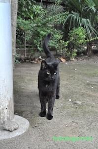 桜川公園の黒猫1
