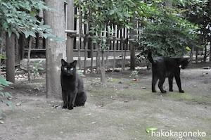 桜川公園の黒猫2