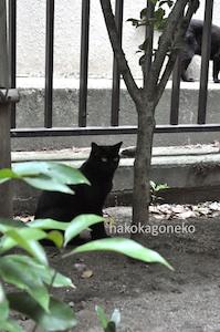 桜川公園の黒猫3