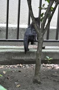 桜川公園の黒猫4