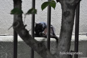 桜川公園の黒猫5