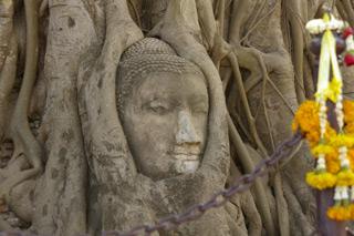 木の根に埋め込まれた仏像の頭