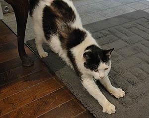 猫足と伸び