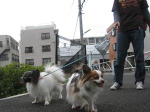 まるめ革セパレートリードで一緒にお散歩!