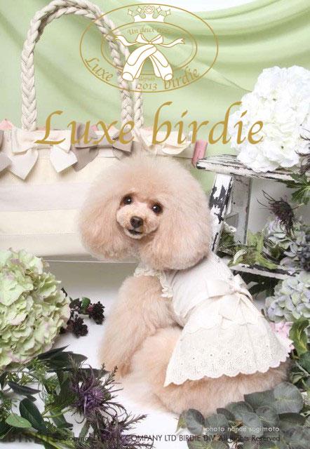 Luxebirdie2017 spring