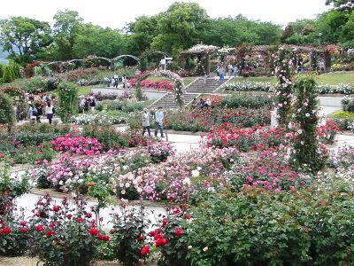 鹿屋薔薇園