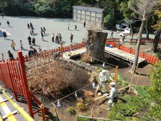 鶴岡八幡宮の銀杏