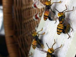 蜂マグネット1