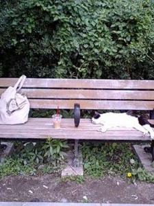 靭公園のネコ1