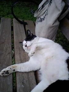 靭公園のネコ2