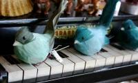 青い鳥とピアノ