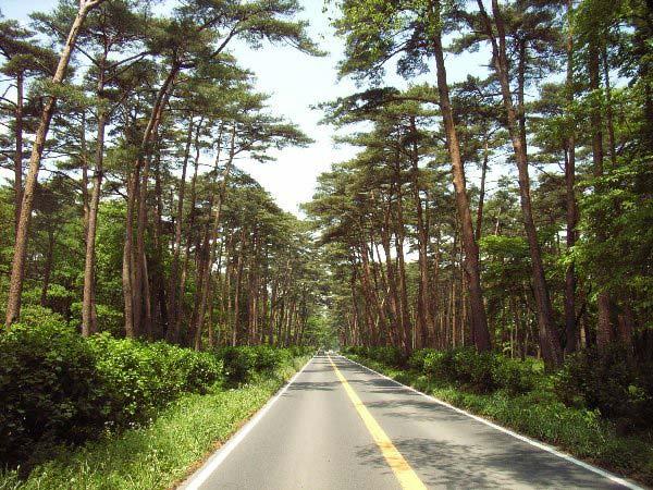 那須の街道松並木
