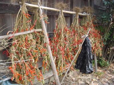 たくさんの収穫が出来ました。 よく干して、沢庵や、白菜の漬物、お料理等に使います。