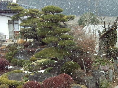 雪が降ってきました。