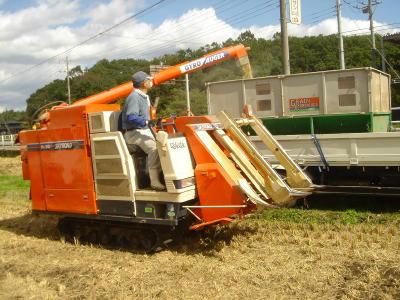 タンクに貯まった玄米を 運搬用の車に直接入れます。