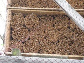 マメコバチの巣