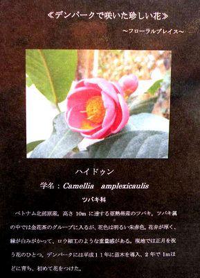 20100115_597501 400.jpg